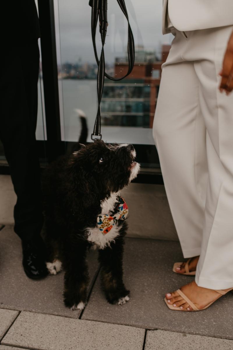 cute dog in wedding photos