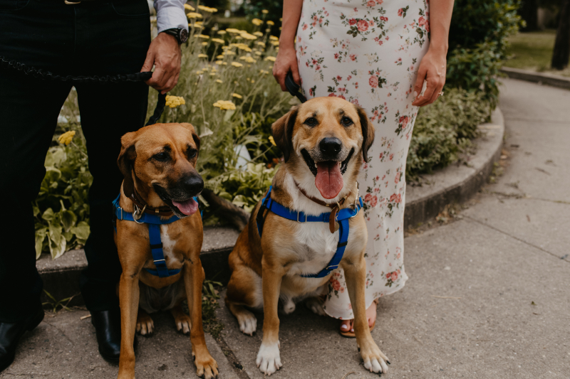 engagement photos with your dogs