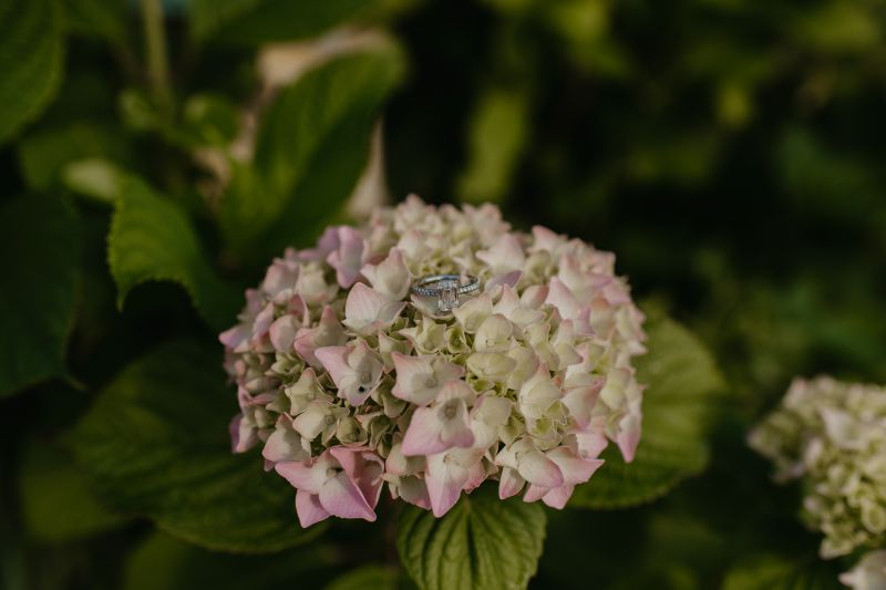 Engagement Ring surrounded by Pink and White colorful flowers and green leaves.